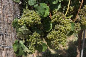 Hood Crest Winery
